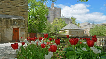 Berkeley College courtyard with red tulips in bloom