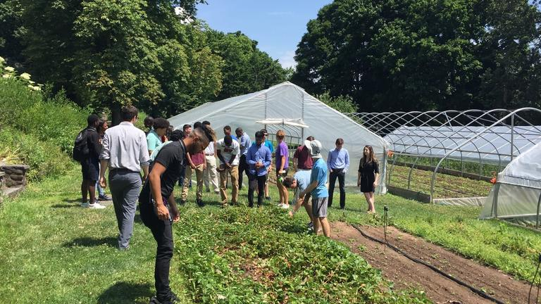 Yale Information Technology interns visit the Yale Farm