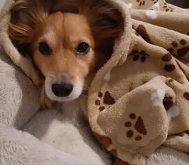 Francesco D'Amato, Graduate Housing, sent in this photo of a cozy Juju.