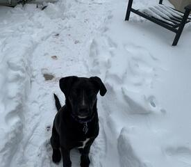 Emily Bludnicki, Environmental Health and Safety, sent in this picture of Clifford in the snow.