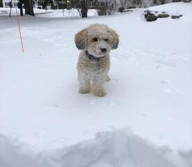 Oliver's first snow day, presented by Emily DiBenigno, Human Resources, Employee Relations.