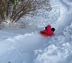 Sharleen Sanchez, Yale College Business Office, sent this sledding picture.